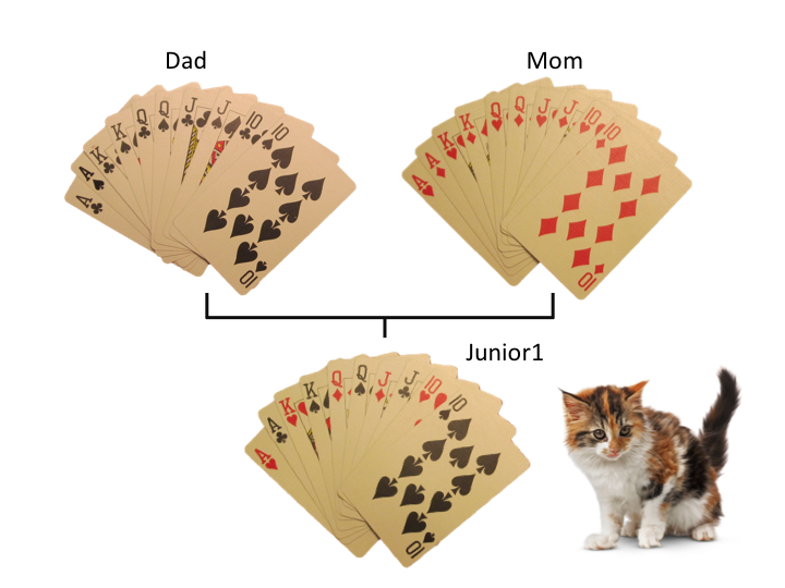 Cards cats
