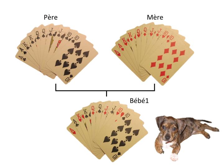 Cartes chiens