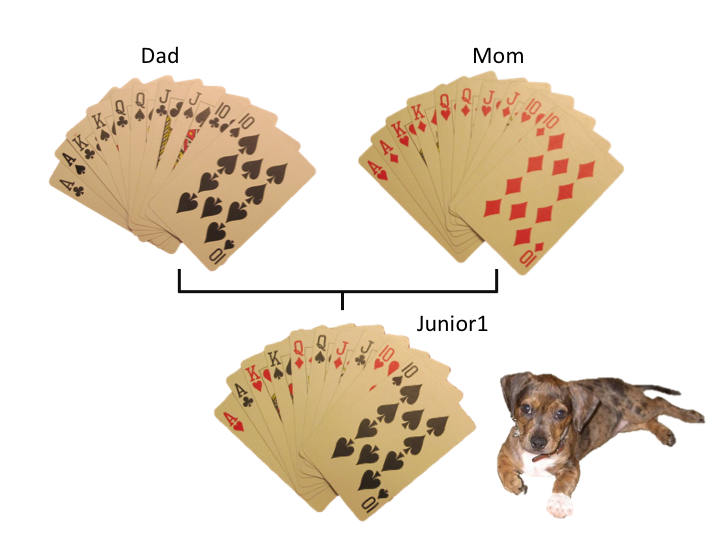 Cards dogs