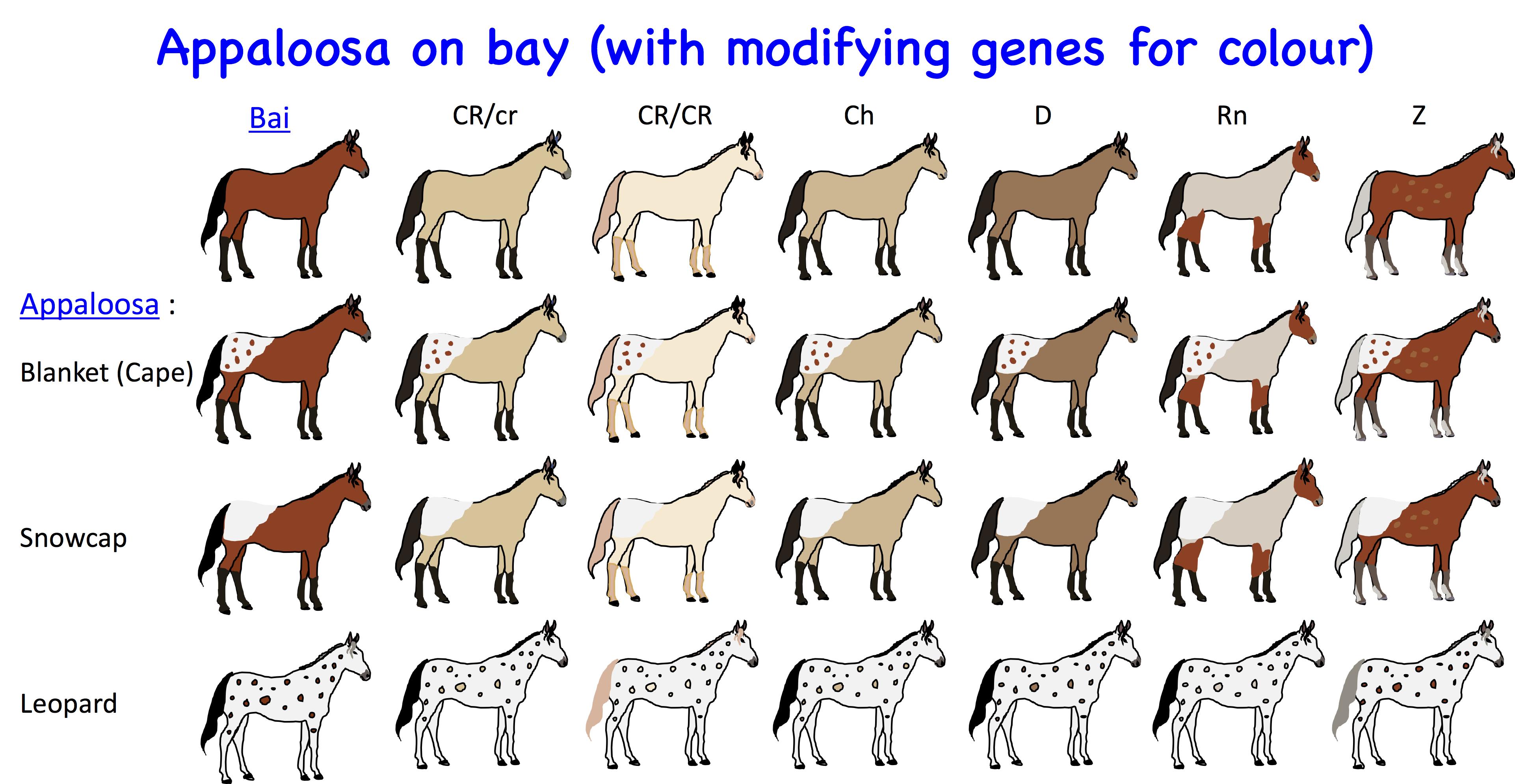 Horse Genetics 2 0 Colours Laboratoire De Genetique Veterinaire